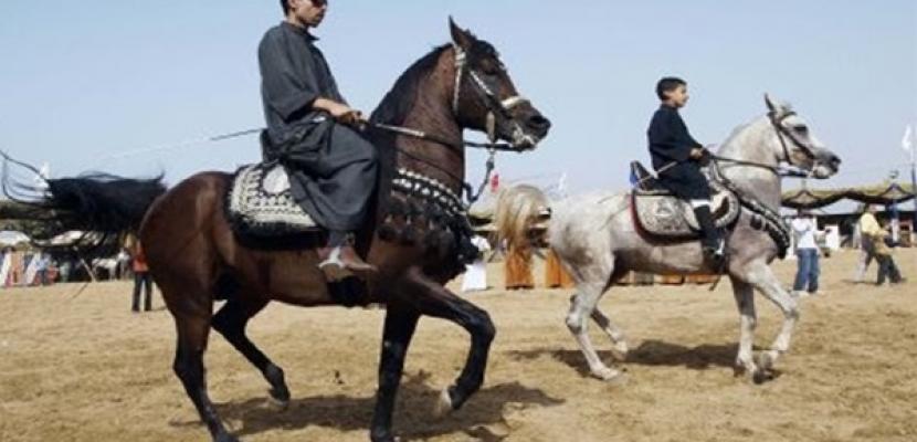 بدء فعاليات المهرجان الثالث والعشرين للخيول العربية بمحافظة الشرقية