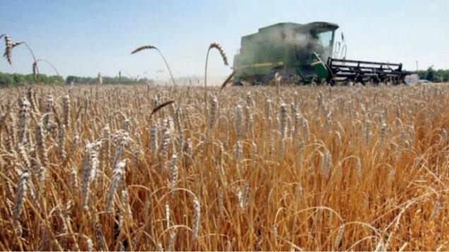 منتجو الحبوب الكيبيكيّون يدافعون عن استخدام المبيدات