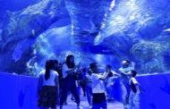 افتتاح أعلى حوض مائي في العالم بهضبة (شنغهاي-التبت) في الصين