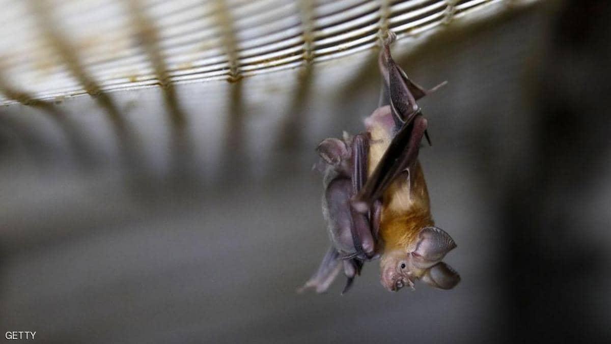 """معهد ووهان يقر بـ""""بحوث الخفافيش"""" ويتهم ترامب بـ""""الفبركة"""""""
