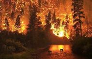 إخلاء منازل مقاطعة بريتش كولومبيا الكندية مع استمرار حرائق الغابات