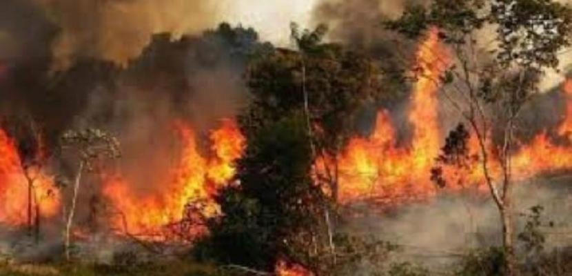 حرائق الغابات تمتد إلى مناطق جديدة بلبنان والجيش يدفع بمروحياته لمحاصرتها